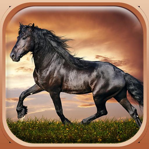 马匹 动态壁纸 HD 個人化 LOGO-玩APPs