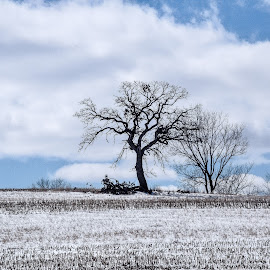 All alone in the cold by Jason Lockhart - Landscapes Prairies, Meadows & Fields ( wisconsin, new glarus, cold, tree, snow, landscape )