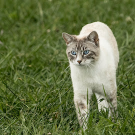 by Jackie Eatinger - Animals - Cats Playing (  )