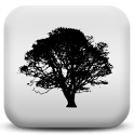Forest Sounds to Relax icon