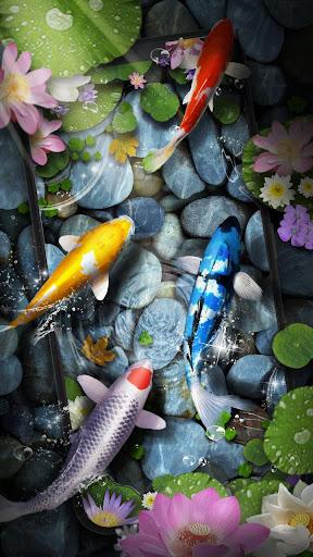 Koi Fish Pond Live Wallpaper App Report On Mobile Action