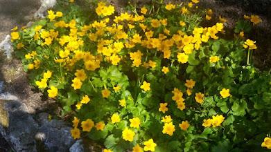 Photo: F4230208 w Ogrodzie Botanicznym