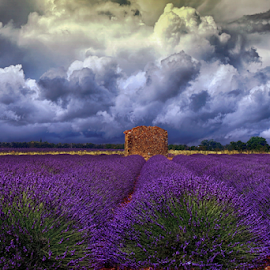 by Ad Spruijt - Flowers Flowers in the Wild (  )