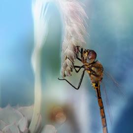 by Zoran Milutinovic - Abstract Macro ( dragonfly, bug, animal )