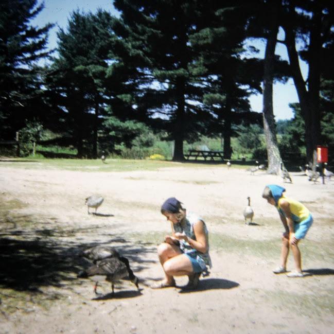 feeding geese at Aqualand WI