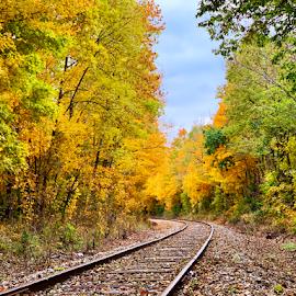 Fall beauty  by Brock Willis - Transportation Railway Tracks ( fall, nature, train tracks, autumn, railway, trees, tracks, colors, train, indiana )