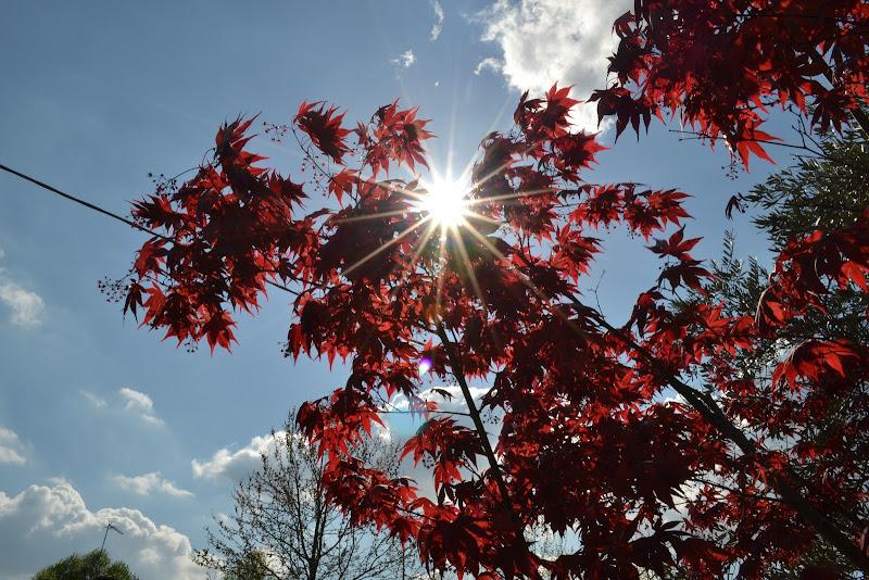 il sole fa capolino di marta_novello