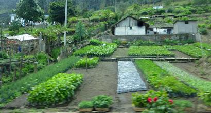 Photo: We saw many neatly tended small plots along the Ambato-Banos road