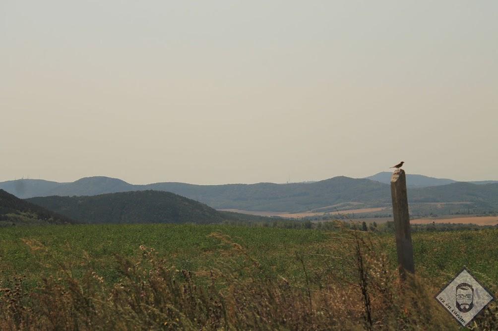 KÉP / Madárka, háttérben balra a Hármashatár-hegy