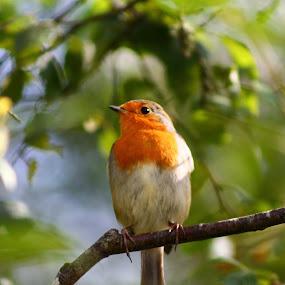 by Matt Gullick - Animals Birds (  )