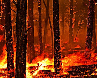 Forest fire wallpapers apps on google play screenshot image voltagebd Gallery