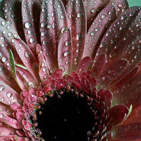 by Bernat Kellermayer - Nature Up Close Flowers - 2011-2013