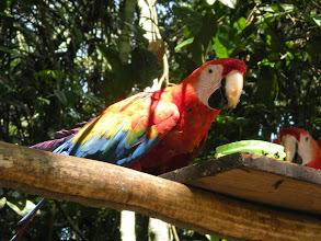 Photo: Macaw