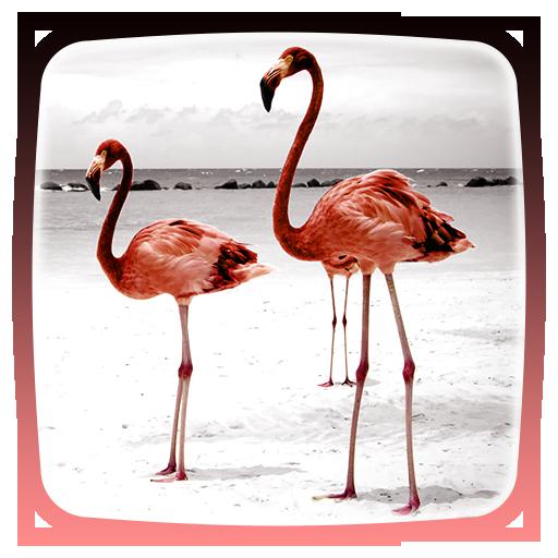 Flamingo Live Wallpaper