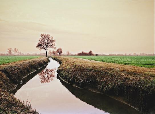L'albero e il suo doppio. di Inazur