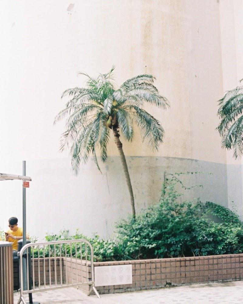random tree. Tsim Sha Tsui, Hong Kong. June 2019.