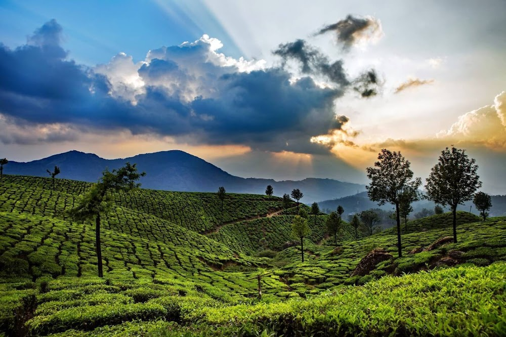 best-places-visit-in-india-in-july-munnar_image