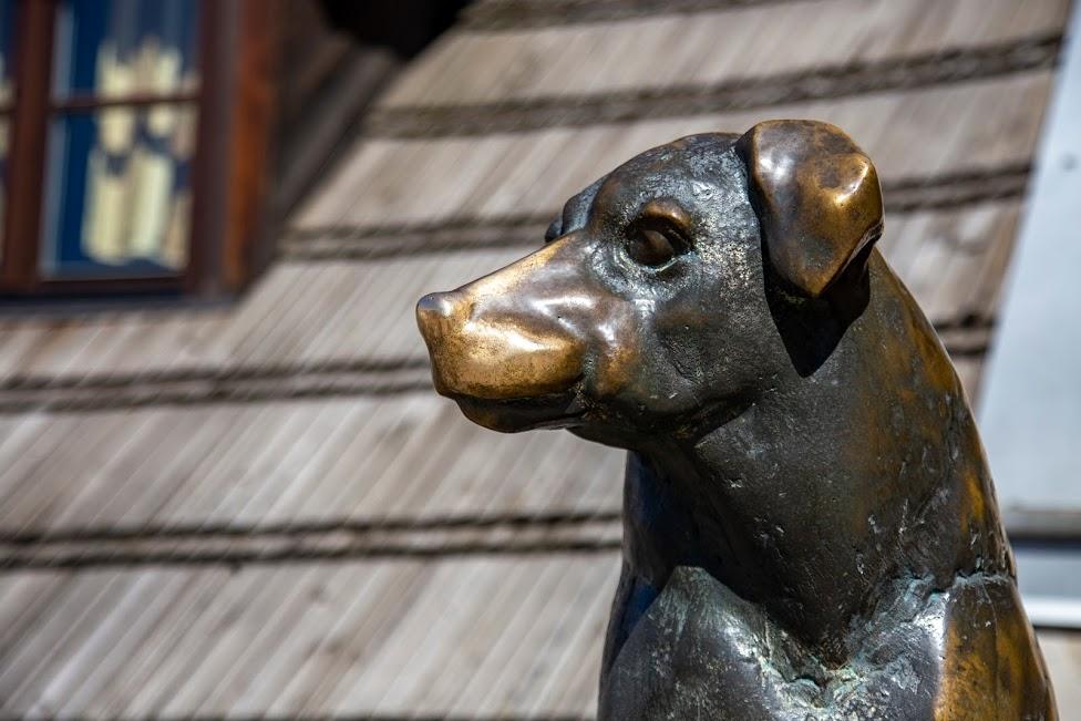 pomnik psa, Kwadrat, Kazimierz Dolny