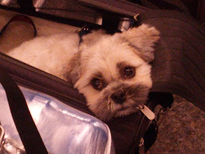 Photo: She thinks she's getting on a plane.