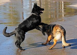 Photo: Lukas og Luca 6 mnd