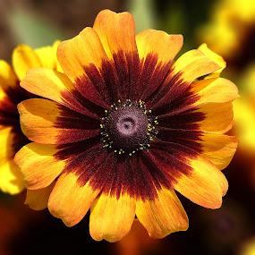 by Rajarshi Das - Flowers Single Flower