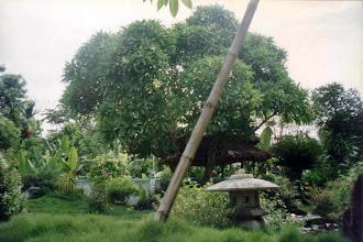 Photo: vườn chùa Huyền Không I