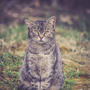pisici duma (1 of 1).JPG