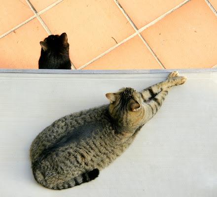 Intreccio di gatti di enricavecchi