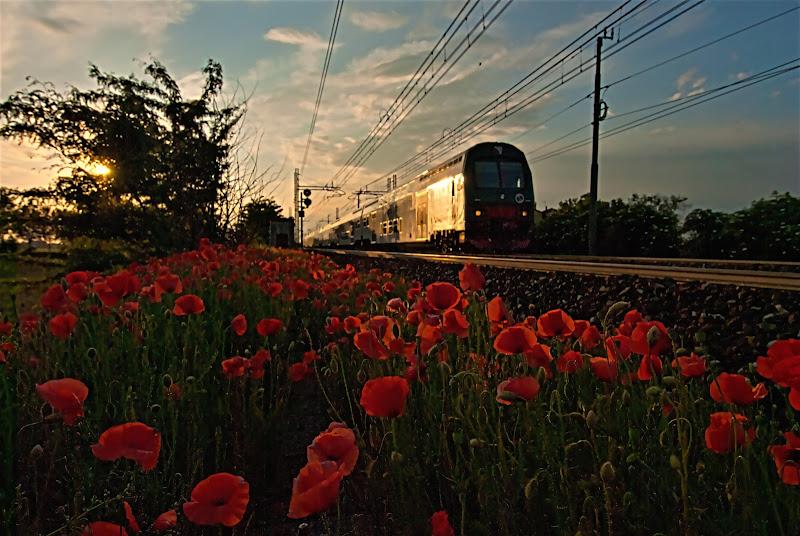 Il treno dei papaveri. di Daimon