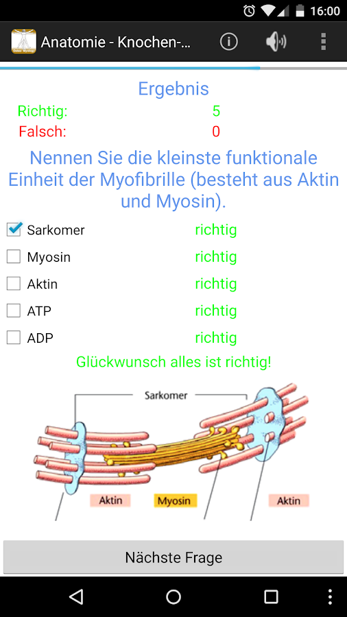Anatomie - Knochen-Muskellehre – Applications Android sur Google Play