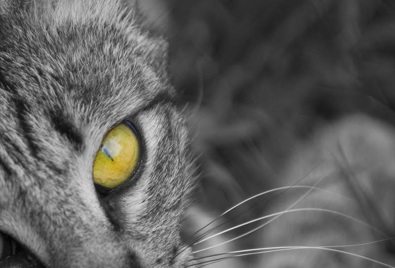Miao. di korp65