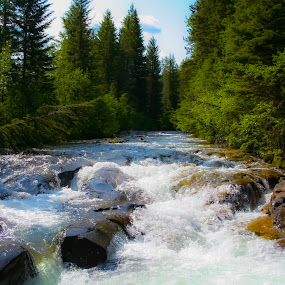 by David  Clayton - Landscapes Waterscapes ( rivers, mountain, mountains, rapids, creek, wilderness, montana, river, evergreen, trees,  )