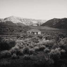 home sweet home  by Michael Keel - Black & White Landscapes ( desert life, mono lake, sierra )