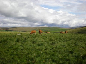 Photo: PW - From Malham Tarn to Fountains Fell