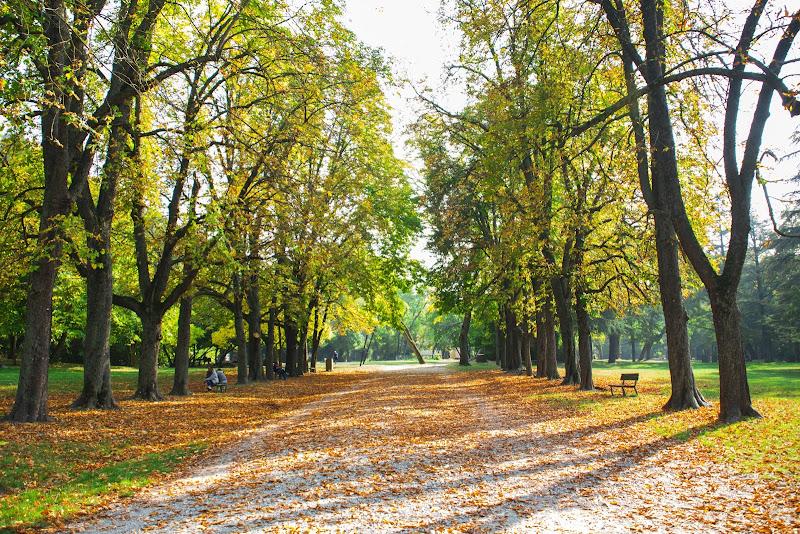 colori d'autunno di Wolfman