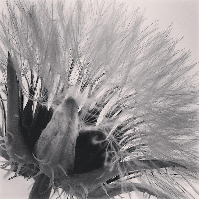 L'attesa di un soffio di vento  di Barbara Licata