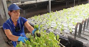 Imagen de archivo de una trabajadora del sector agro en la provincia.