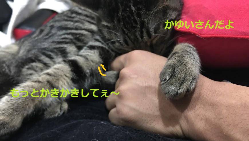 猫のノミ対策!駆除方法は?予防法と効果的な3つの取り方
