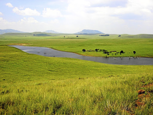 Grassland habitat: The green wetlands in Memel, which is a small town. Memel has good accommo-dation because the town is a birdwatchers' paradise. Picture: SUPPLIED