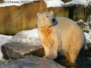 Photo: Goldbaerchen Knut in der Wintersonne :-)