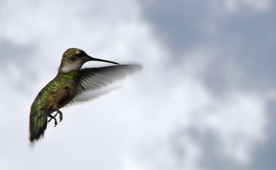 In the Clouds by Jean Hammack - Animals Birds