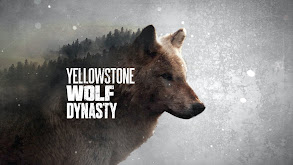 Yellowstone Wolf Dynasty thumbnail