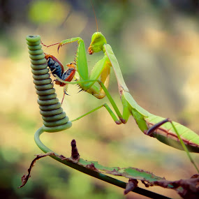 Don't disturb by Muhamad Firman - Animals Insects & Spiders
