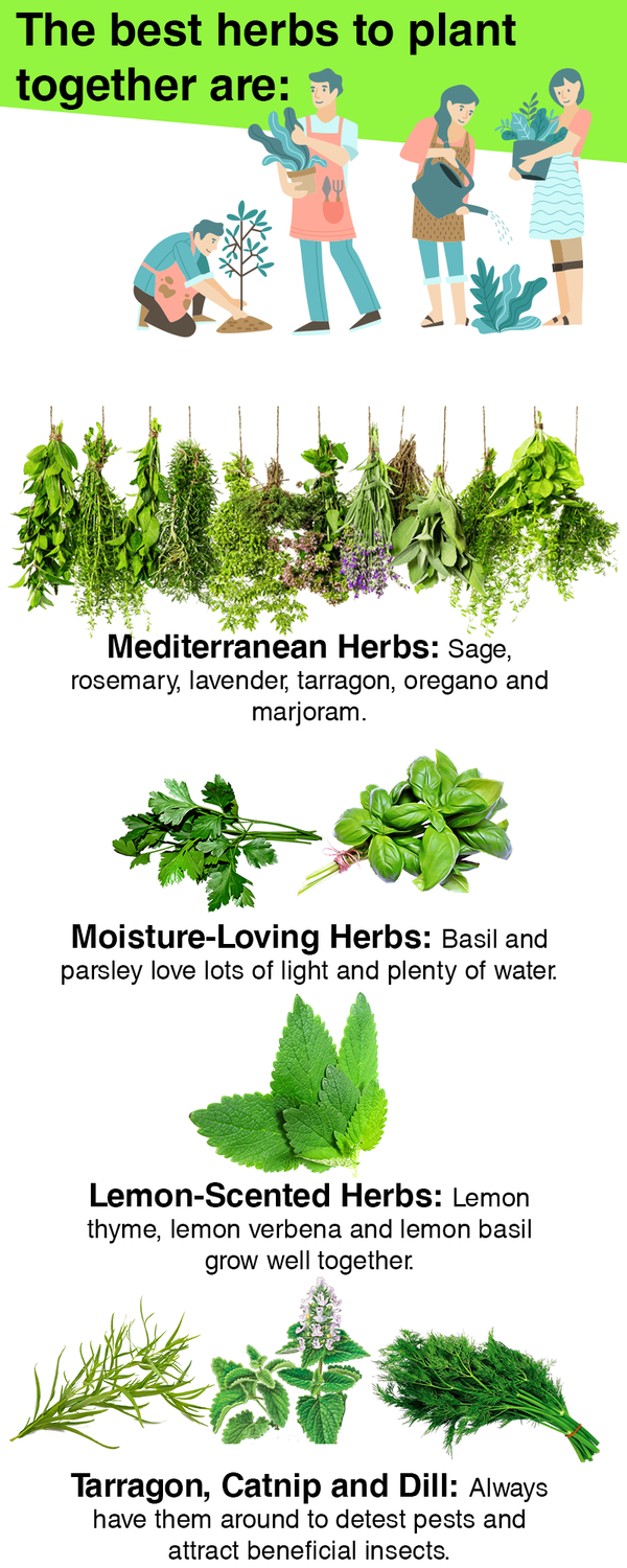 What Are the Best Herbs to Plant Together? 2