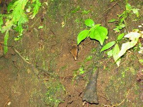 Photo: Genevieve spotted this lizard? snake? in the side of the trail down to the waterfall pools. Very camouflaged!