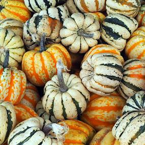 at the market by Donna Davis Kasubeck - Food & Drink Fruits & Vegetables (  )