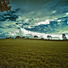 by Andrew Balsillie - Landscapes Prairies, Meadows & Fields