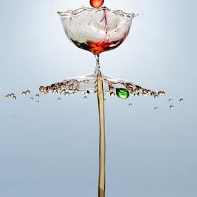 Tulip by Salahudin Damar Jaya - Abstract Water Drops & Splashes ( hsp, water drop )