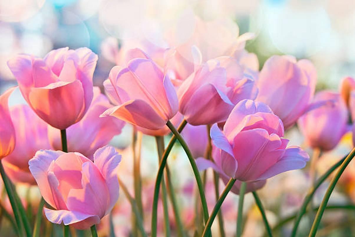 Ảnh có chứa cây, hoa Mô tả được tạo tự động