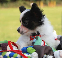 Photo: Arwen Sun for Drakonit 7,5 weeks old